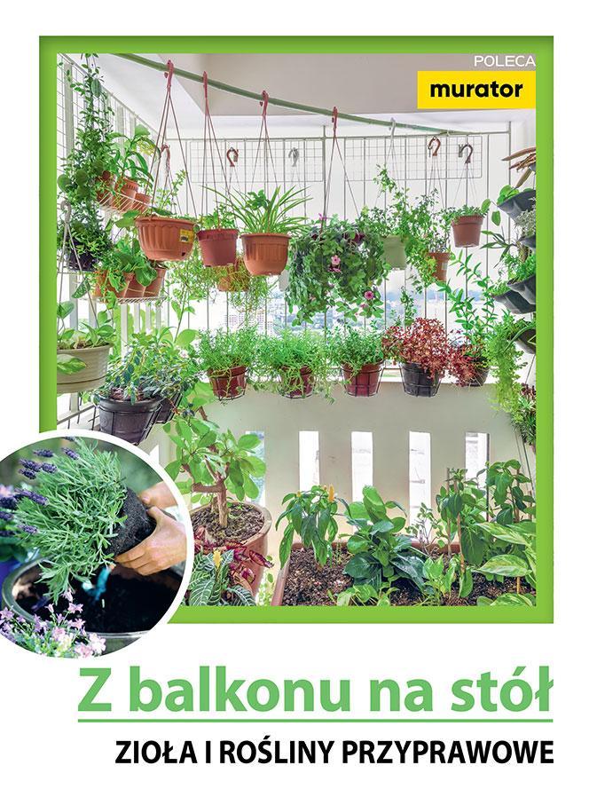 Z balkonu na stół. Zioła i rośliny przyprawowe